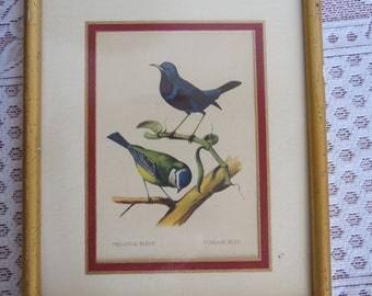 Bird picture frame, blue tit and blue cord, vintage, birds, curiosities, urban jungle, nature, slowlife