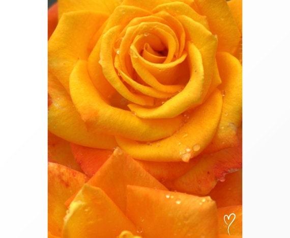 "Orange Wall Decor, Flower Art, Signed Original Fine Art Print, Orange Home Decor, Flower Print, Orange Rose, Rose Print ""Orange Twist"""