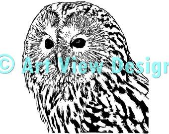 Pattern Owl ©