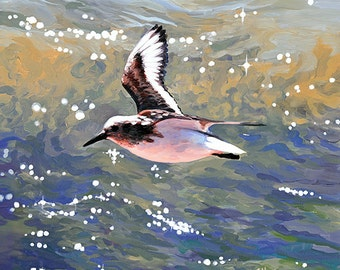 Sanderling Flying #1; Shorebird flying above blue and green water