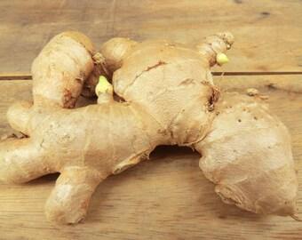 3 Rhizomes Bulb Ginger Root Plant Rhizome Special for Grow Plants