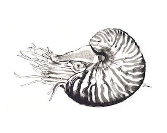 Nautilus Ink Painting 5x7 Fine Art Giclee Print