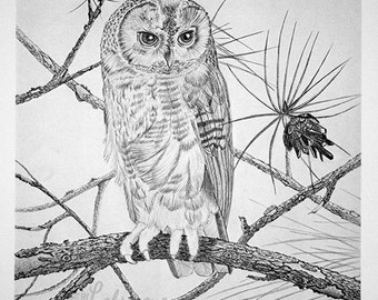 "Saw Whet Owl portrait, owl print, bird portrait, wildlife artwork, black and white drawing, graphite pencil art, 16""x20"""
