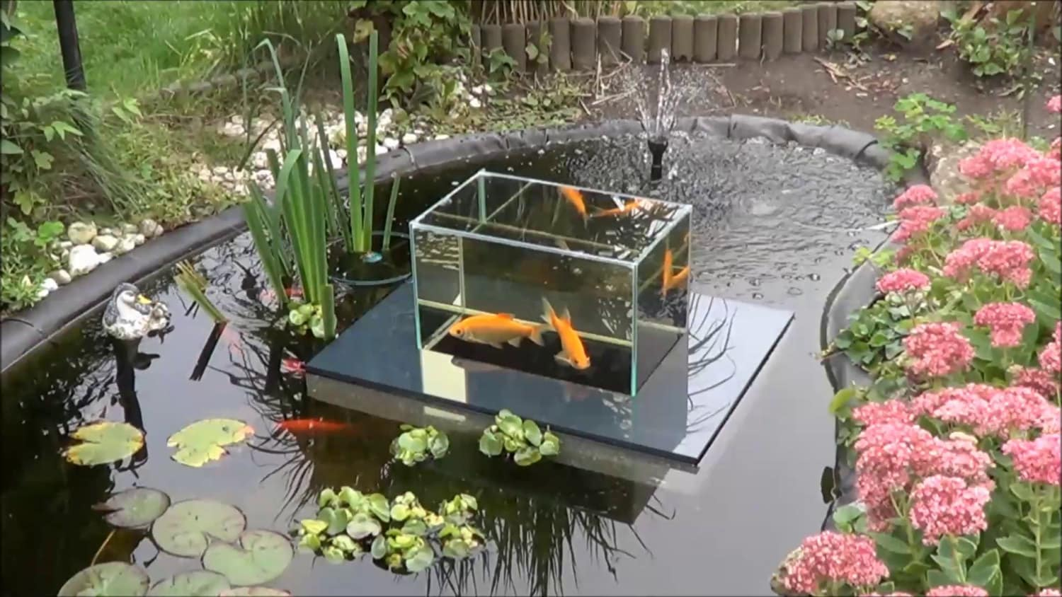 Flying aquarium linear 2500 gray fish observatory observation for Carpe koi aquarium 300 litres
