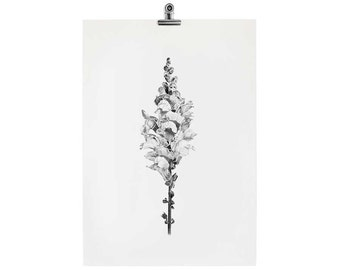 STUDIO SALE // OLD A5 Snapdragon Print