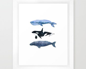 "Three Whale Pod Watercolor Painting Art Print  (8.5x11"")"