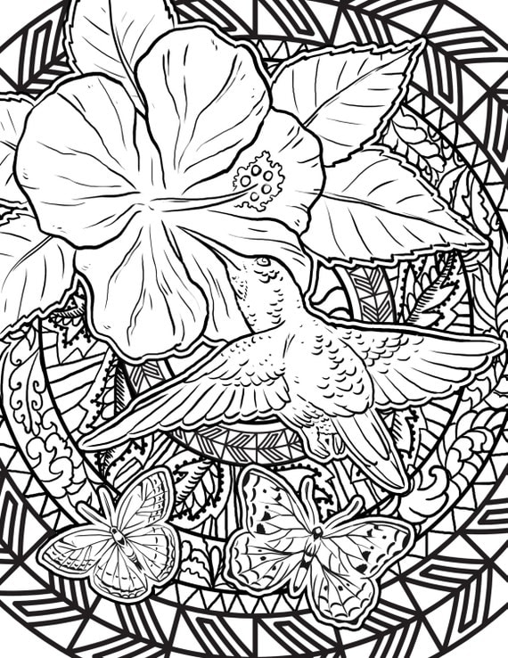 Items similar to Hummingbird Coloring Page Adult Coloring Page