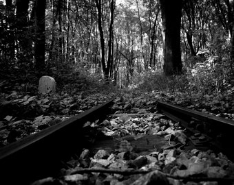 Picture - rail in the forest