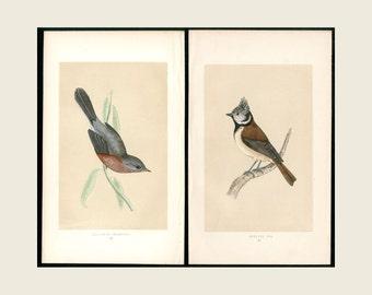 Crested Titmouse & Dartford Warbler - 1851 1st Edition F.O. Morris Birds Of Britain - Original Woodblock Print FREE SHIPPING