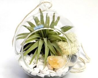 Scorpio November Citrine Air Plant Terrarium Garden Kit • tillandsia birthstone crystal birthday personalize gift planter diy hanging