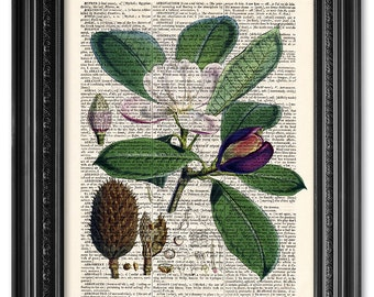 Magnolia print, Dictionary art print, Vintage book art print, upcycled dictionary page, Home Wall Decor, Gift poster [ART 090]