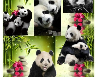 A Gift For Bei Bei