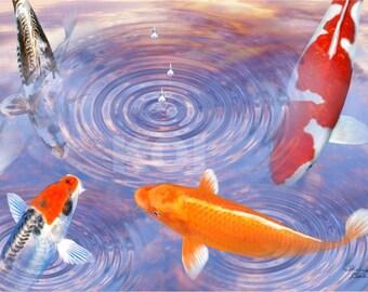 Koi In Sunset Pond Kohaku Orenji Fish Digital Art Giclee Painting Print