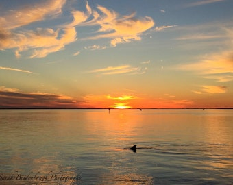 Dolphin at Sunset - FREE SHIPPING US