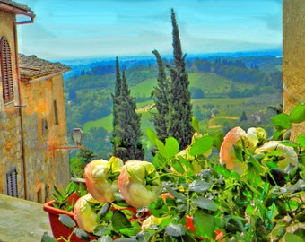 Tuscany - Everything's coming up  Roses
