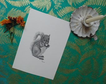 Squirrel print