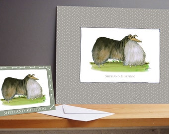 Fun Shetland Sheepdog Gift Print and greeting card