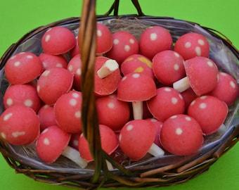 MUSHROOMS RED FRUITS