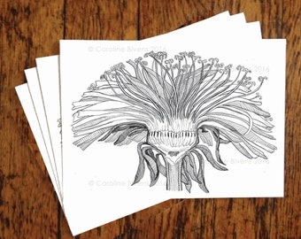 Set of 4 cards (Dandelion Flower) -Floral-Botanical-Greeting Cards-Wedding-Birthday-Thank You-Card-Hand drawn-Blank Cards-Pen and Ink