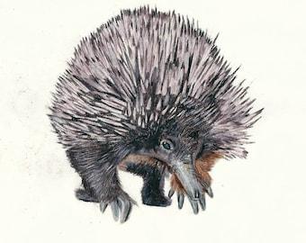 Echidna Print, Anteater. Australian Wildlife Print, Ideal for - Forest Animal Decor / Outback Animal Art / Animal Lover Art Gift.