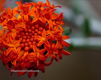 Orange greeting