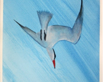Original Watercolor Painting of Diving Tern