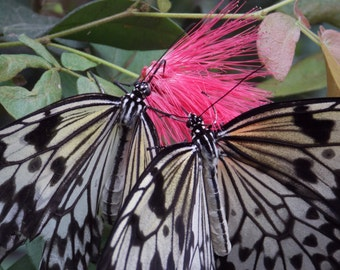 Pair of butterflies digital download