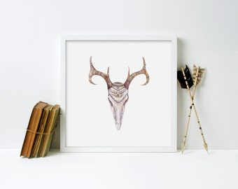 Animal Skull Framed Print - Black Frame, White Frame, Natural Frame - 12 x 12 inches, 16 x 16 inches