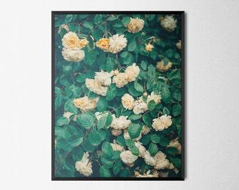 Roses Flowers Photography   Giclée Art Print