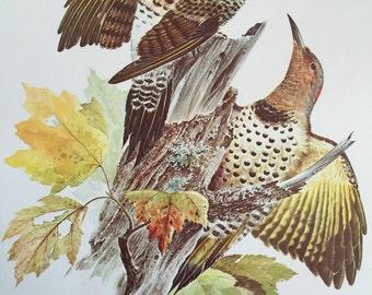 Bird illustration print by Severt Andrewson