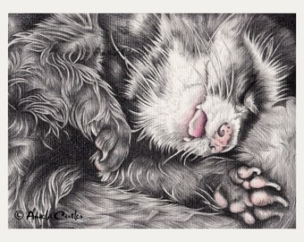 Sleeping Ferret Drawing - Giclee Print