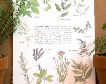 Culinary Herbs, Color Watercolor Print, 8x10