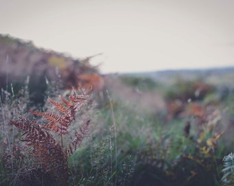 Autumnal Bracken #2