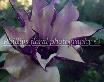 UK floral adventures