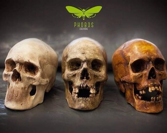 Sculpture replica skull by Phobos