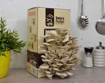 Kit cultivation of mushrooms at home your urban garden mushrooms