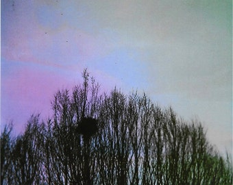 Tree Top (11x14) // Fine Art Experimental Film Photography Print