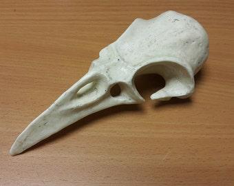 Bird (crow) skull, cosplay or Halloween props