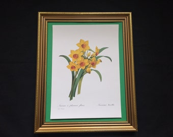 Botanical Lithographic Print Redoute, Quality Print of the Narcissus Tazetta