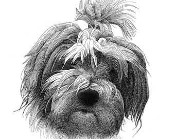 Original Pen and Ink Pet Portrait Drawing - Commission/Made to Order