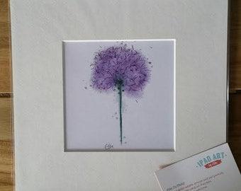 Mounted allium print // allium print // allium drawing // purple flower print // allium gifts // flower gifts // flower art print