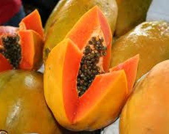 Organic Papaya Seed Oil UNREFINED Cold Pressed Virgin, Undiluted Papaya Seed Carrier Oil for Massage Oil, Facial Oil, Body Oil, Hair Oil,