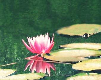"""Fine Art Photo Print """"Reflection"""" Pink Waterlily - Size and Style Options, Photo Print or Canvas Art"""