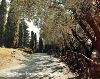 Palatine Hill Walking Path 8x10 Print + Mat