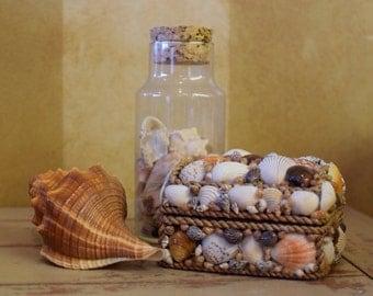 Small Sea Shell Embellished Box | Jewelry Box | Beach Decor | Home decor | Coastal Decor