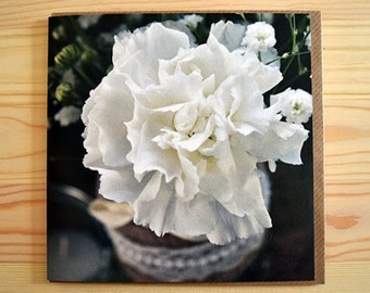 Flower card - art card - blank greeting card - photograph card