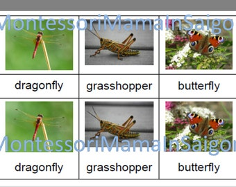 Insects & Minibeasts Montessori three part vocabulary cards