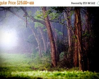 Summer Sale - Enchanted Forest Photography -  Foggy Fairytale Woods  - Rabbit Hole - Fog Mist Woodland - Decorative Wall Art