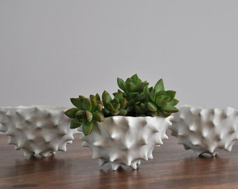 Conch Bowl - White Modern Ceramic Bowl Modern Planter Ceramic Pot