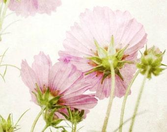 Botanical photography print pink green cosmos flowers girls room wall art - Hidden Gems